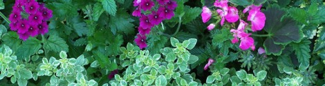 verbena geranium thyme banner