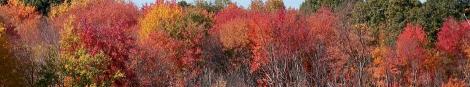 yes foliage 100_1008